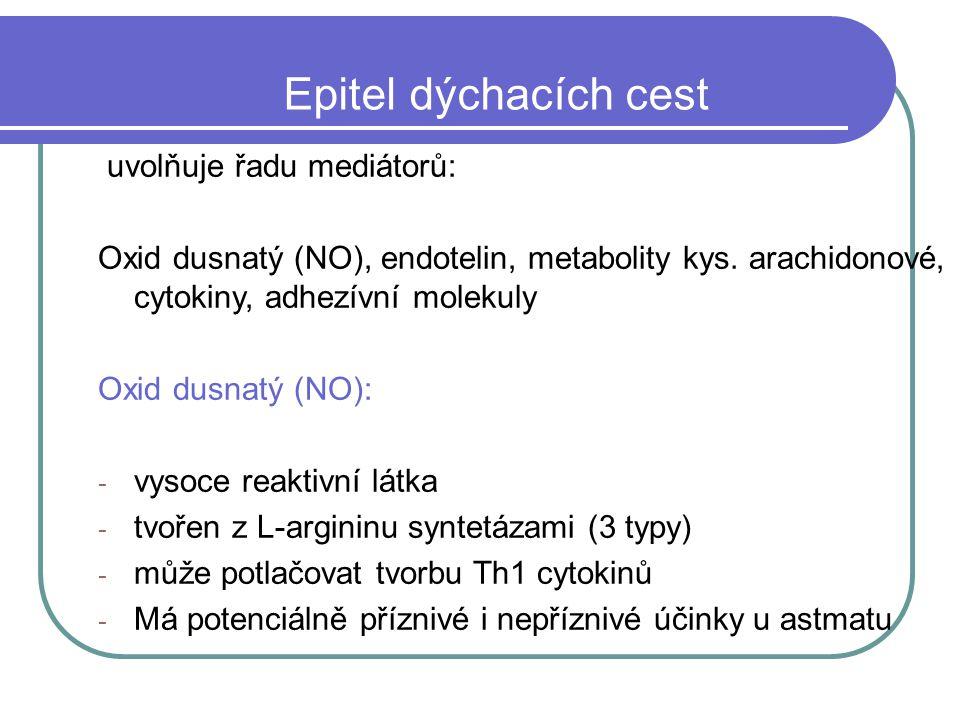 Epitel dýchacích cest uvolňuje řadu mediátorů: Oxid dusnatý (NO), endotelin, metabolity kys.