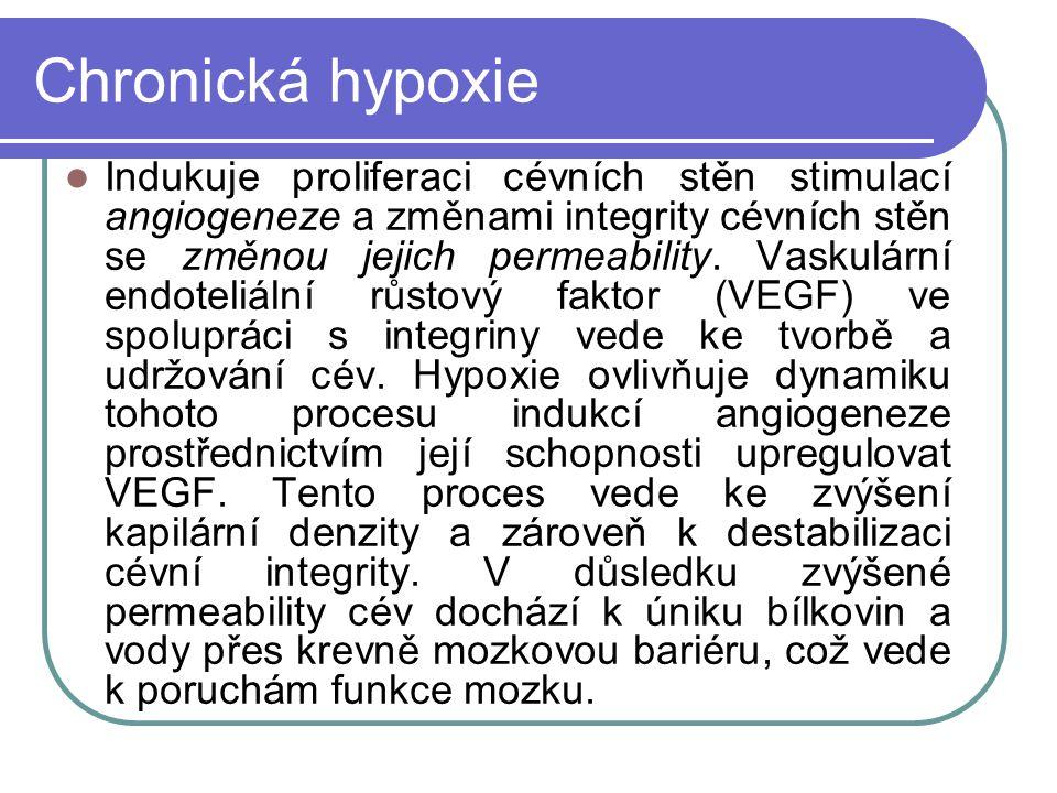 Chronická hypoxie Indukuje proliferaci cévních stěn stimulací angiogeneze a změnami integrity cévních stěn se změnou jejich permeability.