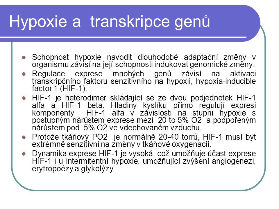 Hypoxie a transkripce genů Schopnost hypoxie navodit dlouhodobé adaptační změny v organismu závisí na její schopnosti indukovat genomické změny.