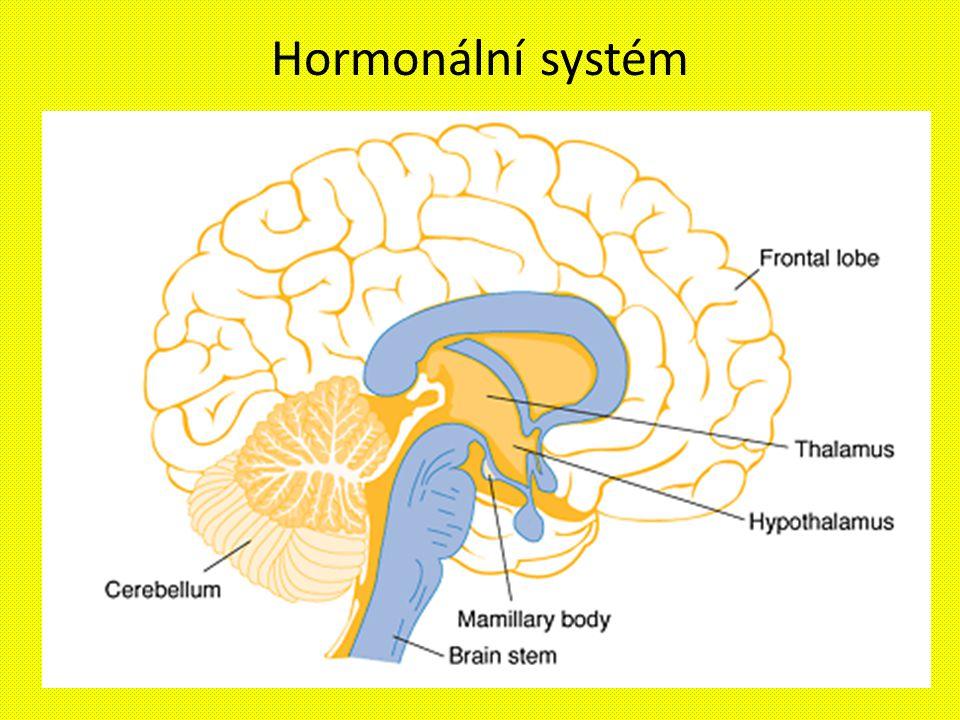 Hormonální systém