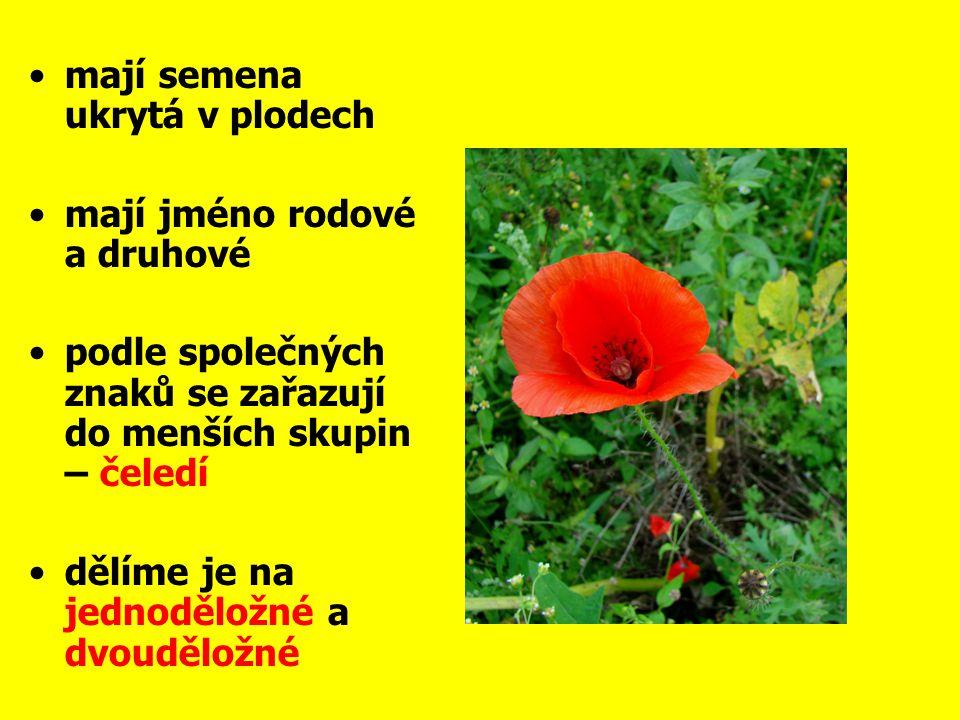mají semena ukrytá v plodech mají jméno rodové a druhové podle společných znaků se zařazují do menších skupin – čeledí dělíme je na jednoděložné a dvo