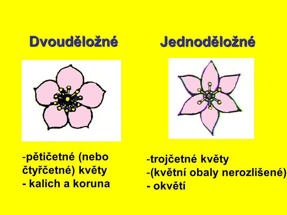 Dvouděložné Jednoděložné - -pětičetné (nebo čtyřčetné) květy - kalich a koruna - -trojčetné květy - -(květní obaly nerozlišené) - okvětí