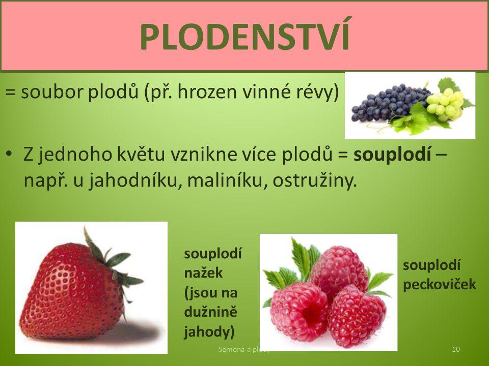 = soubor plodů (př. hrozen vinné révy) Z jednoho květu vznikne více plodů = souplodí – např. u jahodníku, maliníku, ostružiny. Semena a plody10 PLODEN