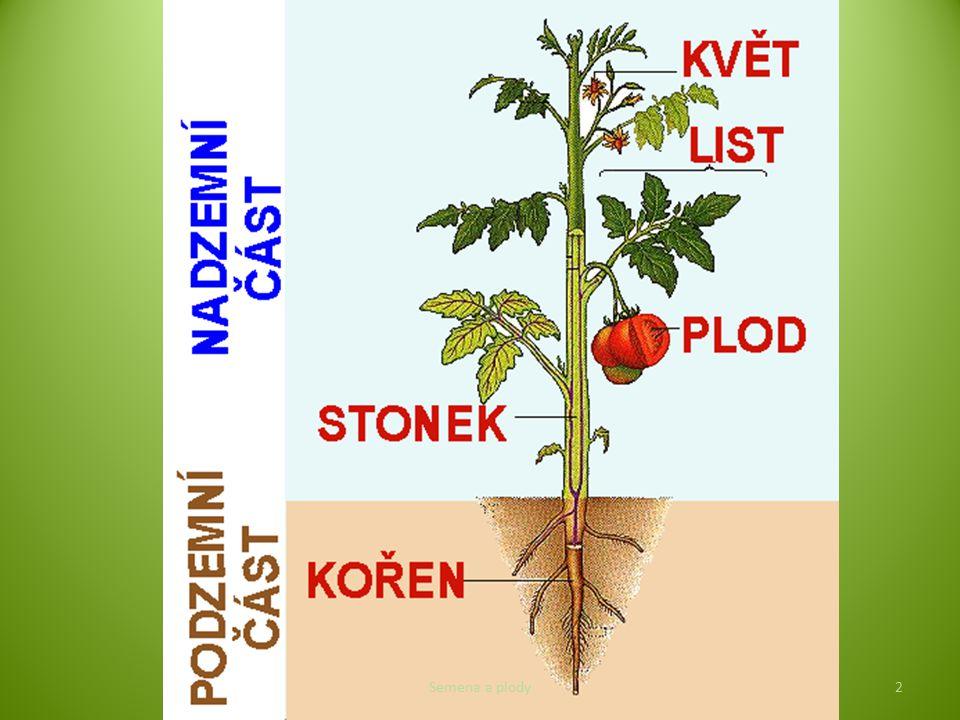 Funkce: ochrana, výživa a rozšiřování semen Pouze u krytosemenných rostlin!!.