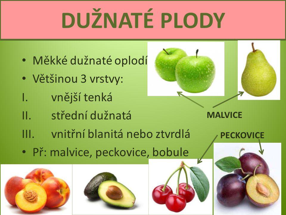 Semena a plody6 DUŽNATÉ PLODY BOBULE