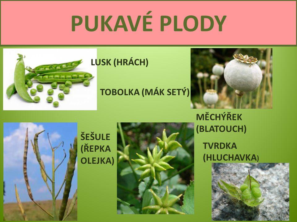 Semena a plody8 PUKAVÉ PLODY LUSK (HRÁCH) TOBOLKA (MÁK SETÝ) ŠEŠULE (ŘEPKA OLEJKA) MĚCHÝŘEK (BLATOUCH) TVRDKA (HLUCHAVKA )