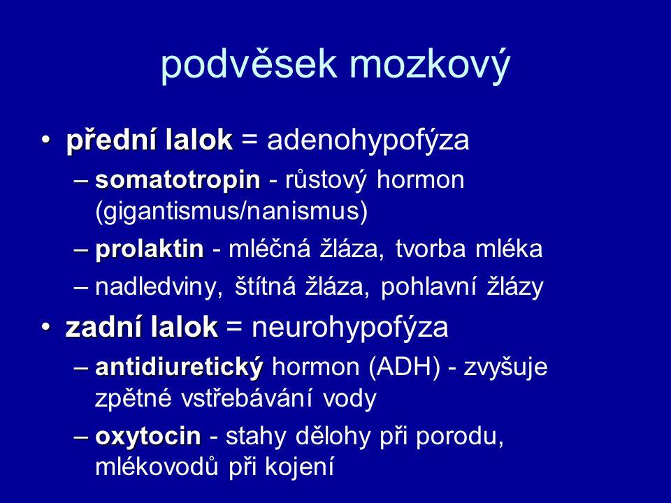 podvěsek mozkový přední lalokpřední lalok = adenohypofýza –somatotropin –somatotropin - růstový hormon (gigantismus/nanismus) –prolaktin –prolaktin -