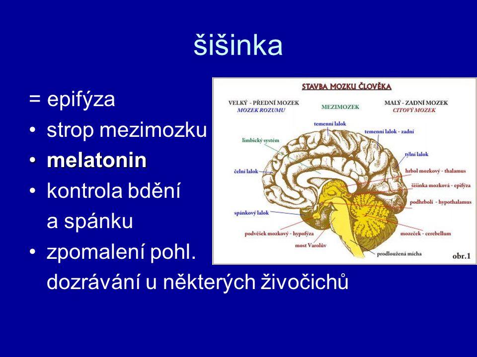 šišinka = epifýza strop mezimozku melatoninmelatonin kontrola bdění a spánku zpomalení pohl. dozrávání u některých živočichů