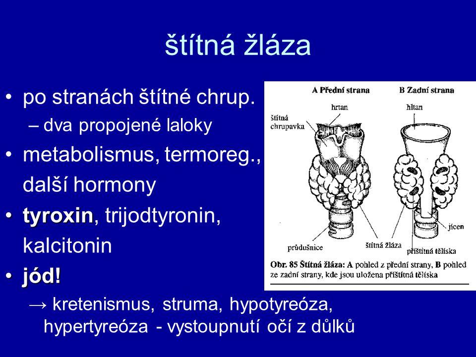 štítná žláza po stranách štítné chrup. –dva propojené laloky metabolismus, termoreg., další hormony tyroxintyroxin, trijodtyronin, kalcitonin jód!jód!