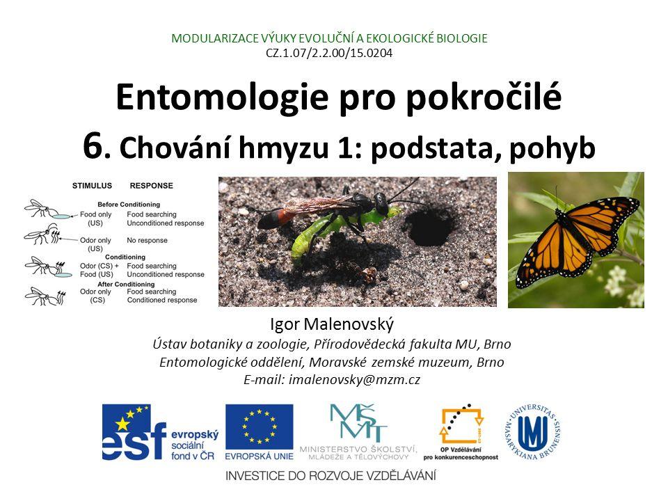 Entomologie pro pokročilé 6. Chování hmyzu 1: podstata, pohyb Igor Malenovský Ústav botaniky a zoologie, Přírodovědecká fakulta MU, Brno Entomologické