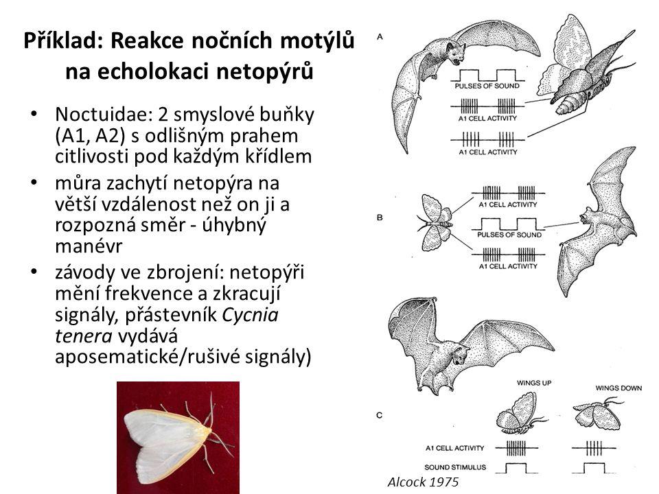 Příklad: Reakce nočních motýlů na echolokaci netopýrů Noctuidae: 2 smyslové buňky (A1, A2) s odlišným prahem citlivosti pod každým křídlem můra zachyt