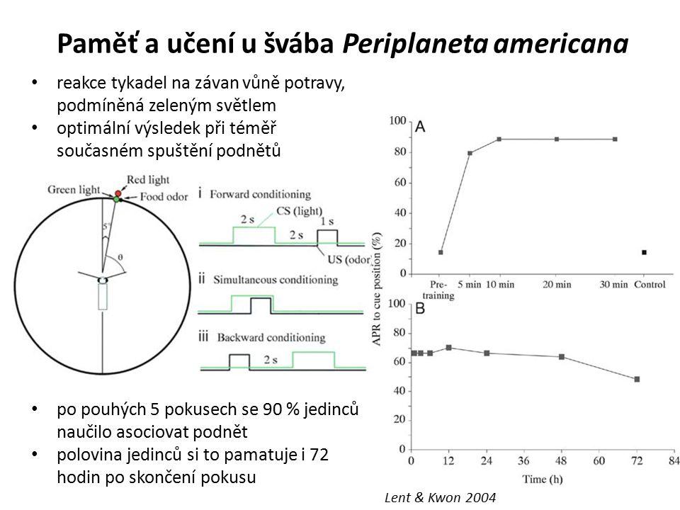 Paměť a učení u švába Periplaneta americana po pouhých 5 pokusech se 90 % jedinců naučilo asociovat podnět polovina jedinců si to pamatuje i 72 hodin