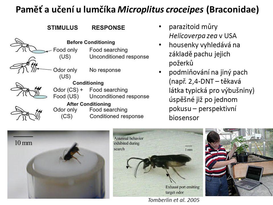Paměť a učení u lumčíka Microplitus croceipes (Braconidae) parazitoid můry Helicoverpa zea v USA housenky vyhledává na základě pachu jejich požerků po