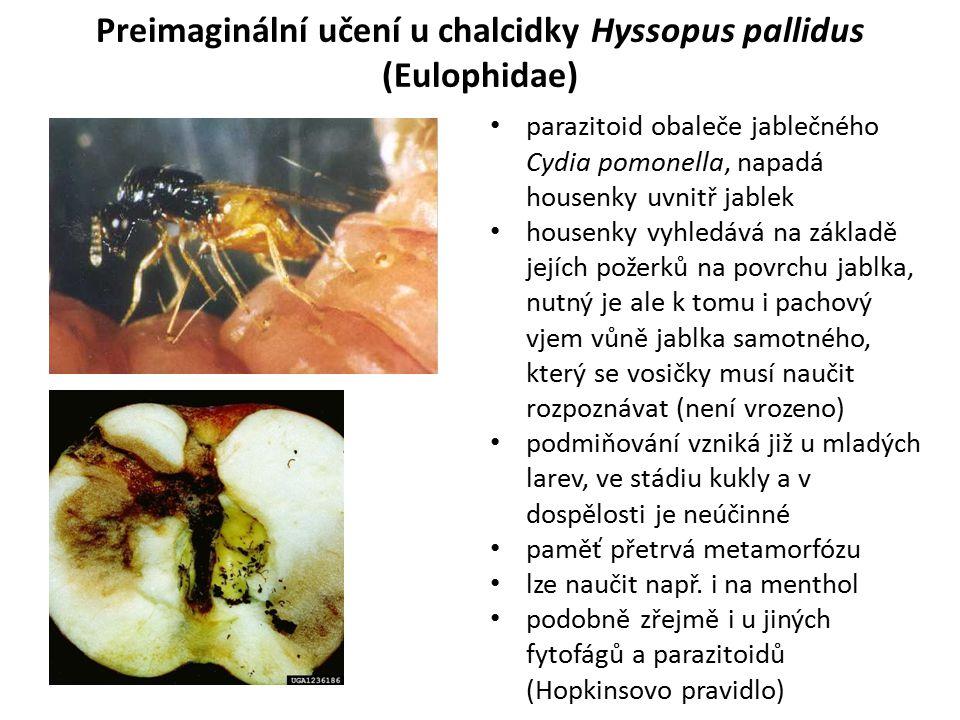 Preimaginální učení u chalcidky Hyssopus pallidus (Eulophidae) parazitoid obaleče jablečného Cydia pomonella, napadá housenky uvnitř jablek housenky v