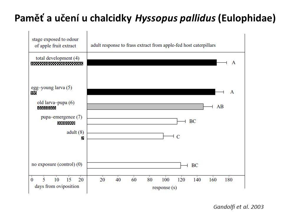 Paměť a učení u chalcidky Hyssopus pallidus (Eulophidae) Gandolfi et al. 2003