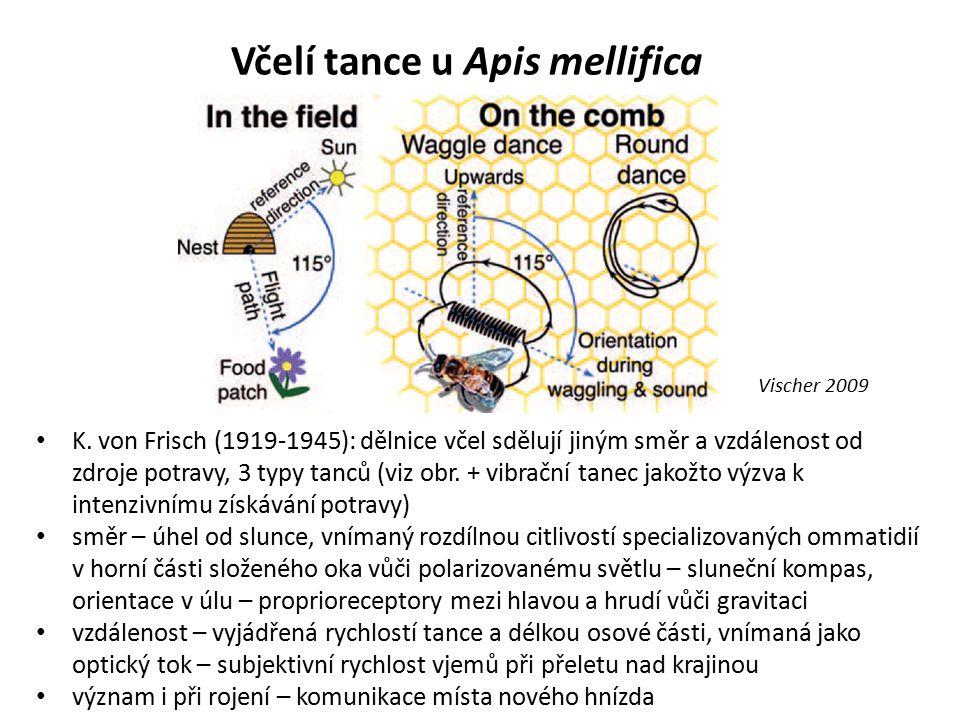 Včelí tance u Apis mellifica K. von Frisch (1919-1945): dělnice včel sdělují jiným směr a vzdálenost od zdroje potravy, 3 typy tanců (viz obr. + vibra