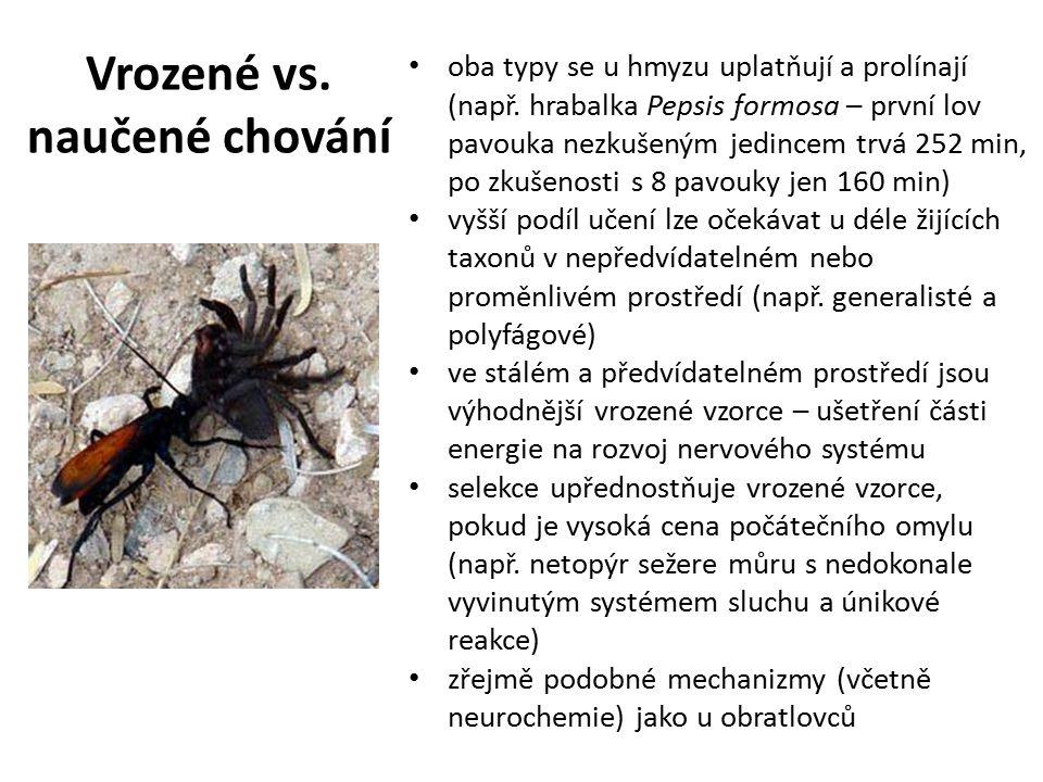 Vrozené vs. naučené chování oba typy se u hmyzu uplatňují a prolínají (např. hrabalka Pepsis formosa – první lov pavouka nezkušeným jedincem trvá 252