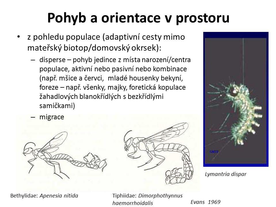 Pohyb a orientace v prostoru Evans 1969 Bethylidae: Apenesia nitidaTiphiidae: Dimorphothynnus haemorrhoidalis Lymantria dispar z pohledu populace (ada