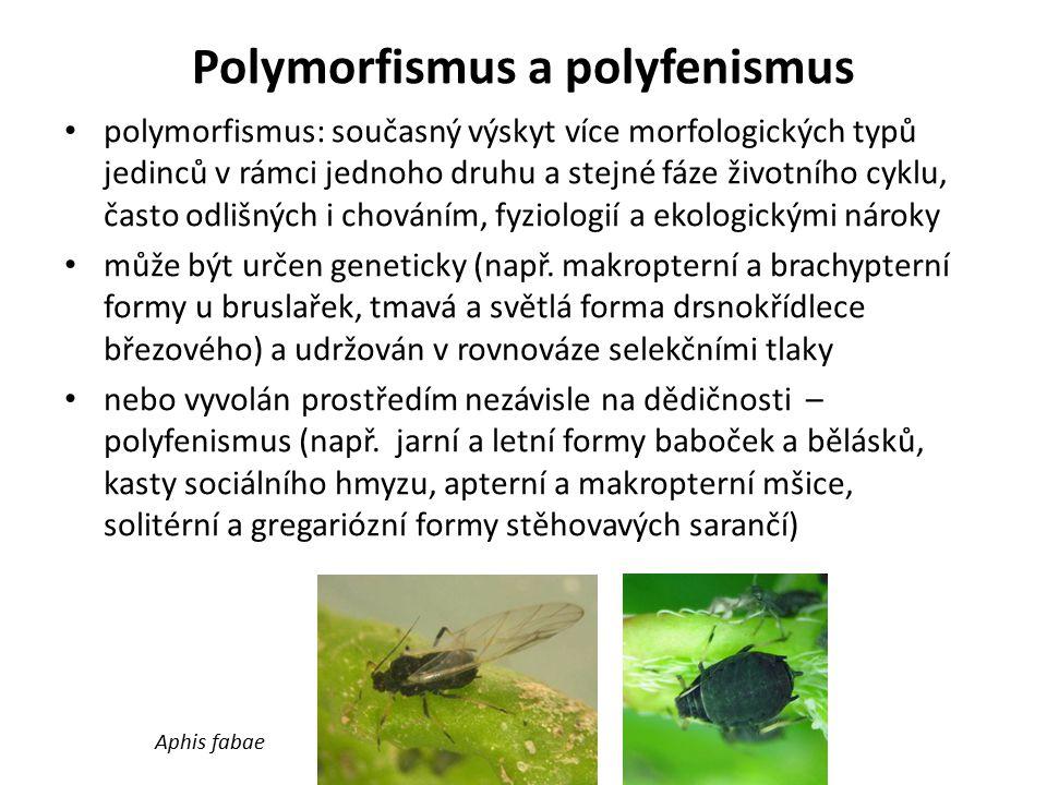 Polymorfismus a polyfenismus polymorfismus: současný výskyt více morfologických typů jedinců v rámci jednoho druhu a stejné fáze životního cyklu, čast