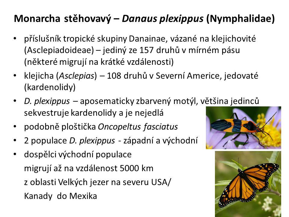 Monarcha stěhovavý – Danaus plexippus (Nymphalidae) příslušník tropické skupiny Danainae, vázané na klejichovité (Asclepiadoideae) – jediný ze 157 dru
