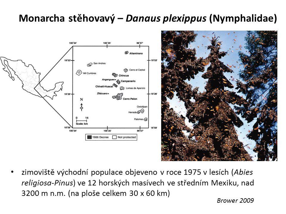 Monarcha stěhovavý – Danaus plexippus (Nymphalidae) Brower 2009 zimoviště východní populace objeveno v roce 1975 v lesích (Abies religiosa-Pinus) ve 1