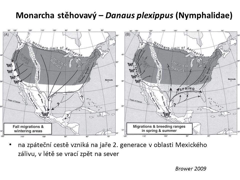 Monarcha stěhovavý – Danaus plexippus (Nymphalidae) Brower 2009 na zpáteční cestě vzniká na jaře 2. generace v oblasti Mexického zálivu, v létě se vra