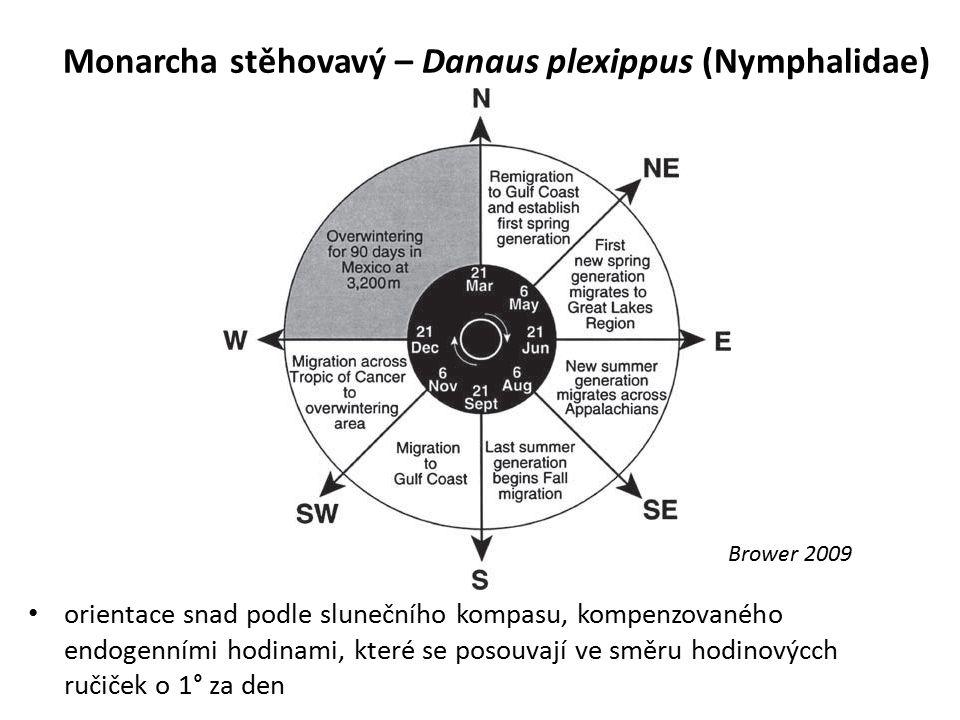 Monarcha stěhovavý – Danaus plexippus (Nymphalidae) orientace snad podle slunečního kompasu, kompenzovaného endogenními hodinami, které se posouvají v