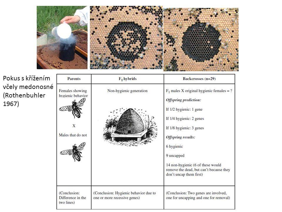 Pokus s křížením včely medonosné (Rothenbuhler 1967)