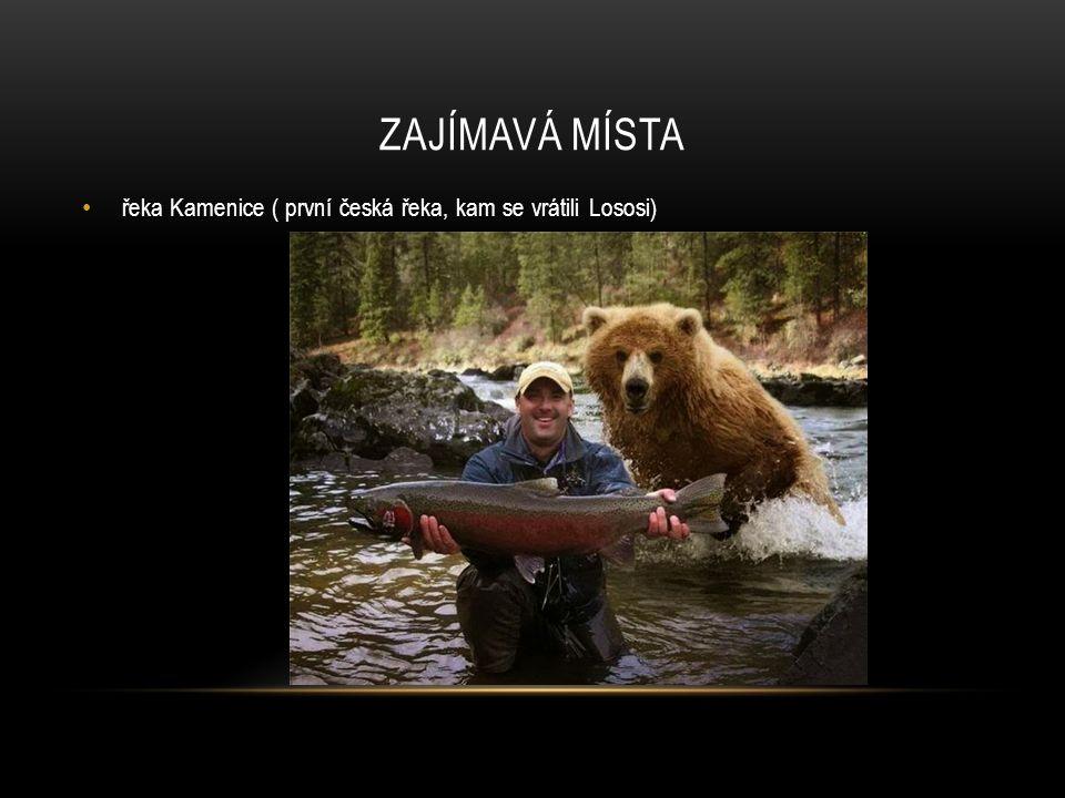 ZAJÍMAVÁ MÍSTA řeka Kamenice ( první česká řeka, kam se vrátili Lososi)