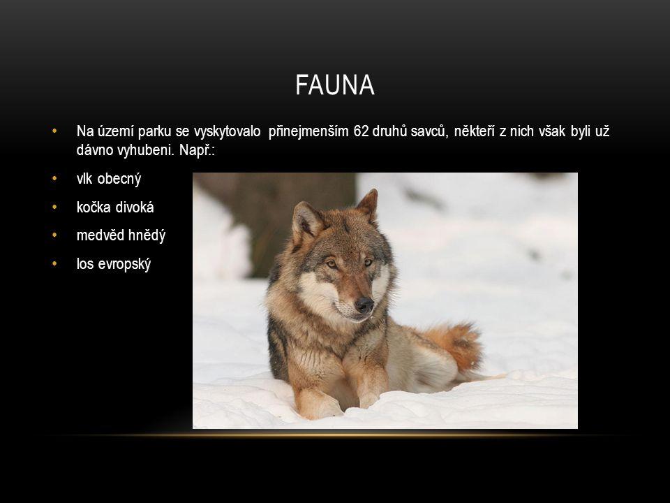 FAUNA Na území parku se vyskytovalo přinejmenším 62 druhů savců, někteří z nich však byli už dávno vyhubeni. Např.: vlk obecný kočka divoká medvěd hně