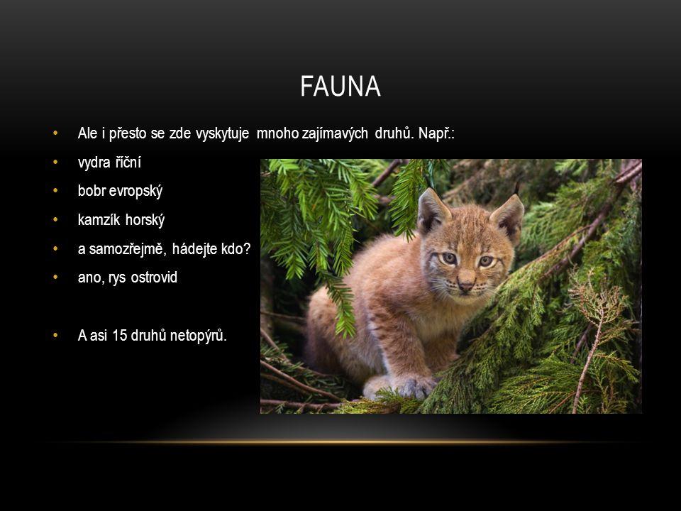 FAUNA Ale i přesto se zde vyskytuje mnoho zajímavých druhů. Např.: vydra říční bobr evropský kamzík horský a samozřejmě, hádejte kdo? ano, rys ostrovi