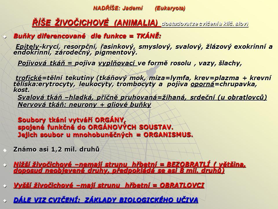 NADŘÍŠE: Jaderní (Eukaryota) ŘÍŠE ŽIVOČICHOVÉ (ANIMALIA) dostudovat ze cvičení a klíč. slov) podříše Prvoci (Protozoa) podříše Mnohobuněční (Polycytoz