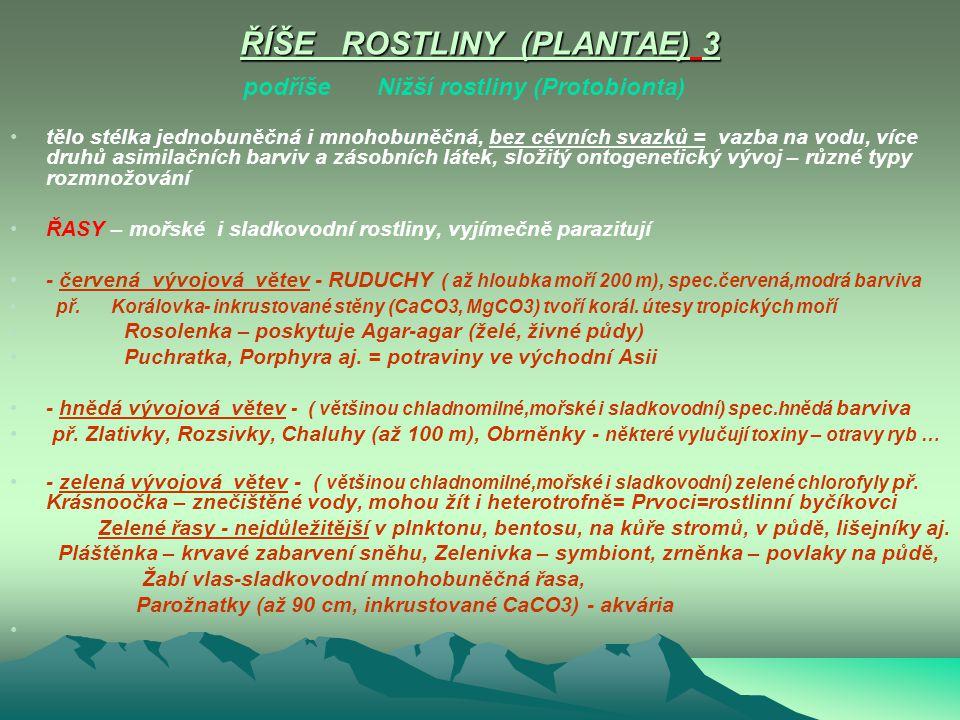 ŘÍŠE ROSTLINY (PLANTAE) 2 podříše Nižší rostliny (Protobionta) podříše Vyšší rostliny (Carmobionta) ŘÍŠE ROSTLINY (PLANTAE) 2 podříše Nižší rostliny (