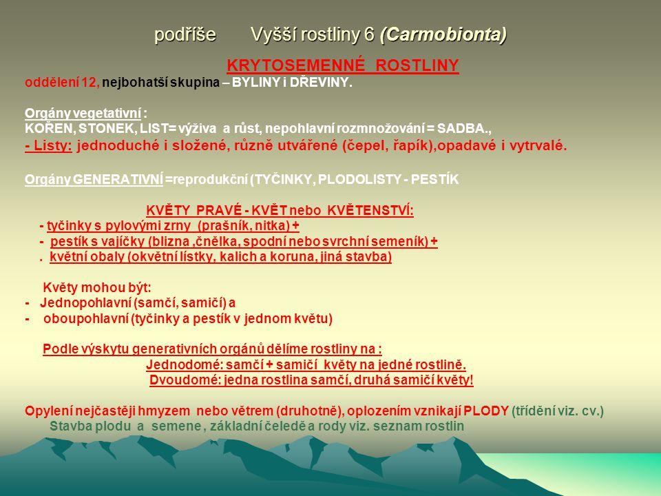podříše Vyšší rostliny 6 (Carmobionta) KRYTOSEMENNÉ ROSTLINY oddělení 12, nejbohatší skupina – BYLINY i DŘEVINY.