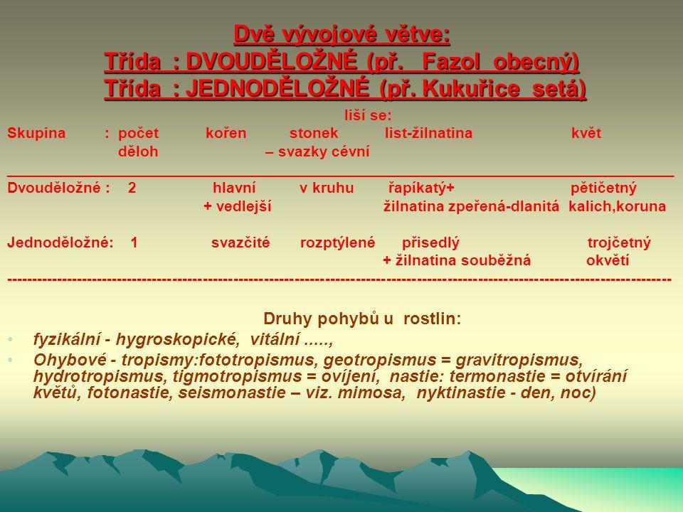 podříše Vyšší rostliny 6 (Carmobionta) KRYTOSEMENNÉ ROSTLINY oddělení 12, nejbohatší skupina – BYLINY i DŘEVINY. Orgány vegetativní : KOŘEN, STONEK, L
