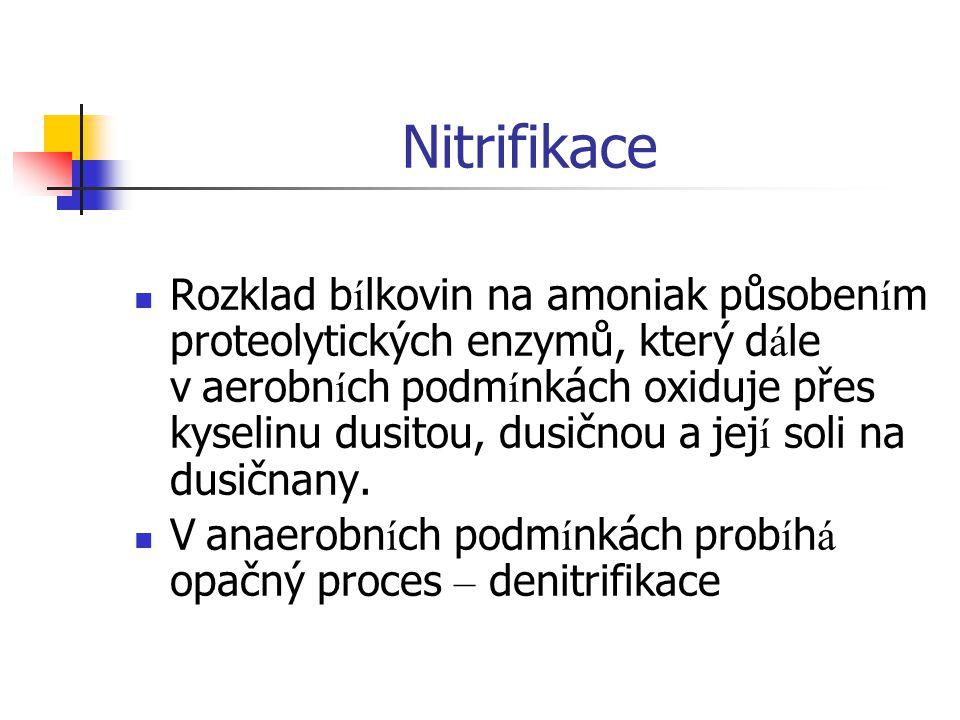 Nitrifikace Rozklad b í lkovin na amoniak působen í m proteolytických enzymů, který d á le v aerobn í ch podm í nkách oxiduje přes kyselinu dusitou, d