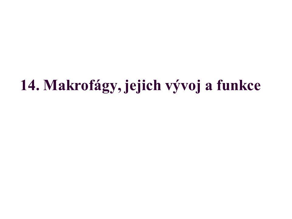 14. Makrofágy, jejich vývoj a funkce
