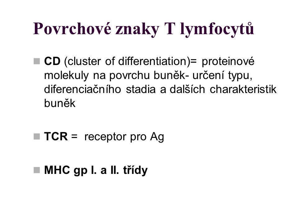 Povrchové znaky T lymfocytů CD (cluster of differentiation)= proteinové molekuly na povrchu buněk- určení typu, diferenciačního stadia a dalších chara