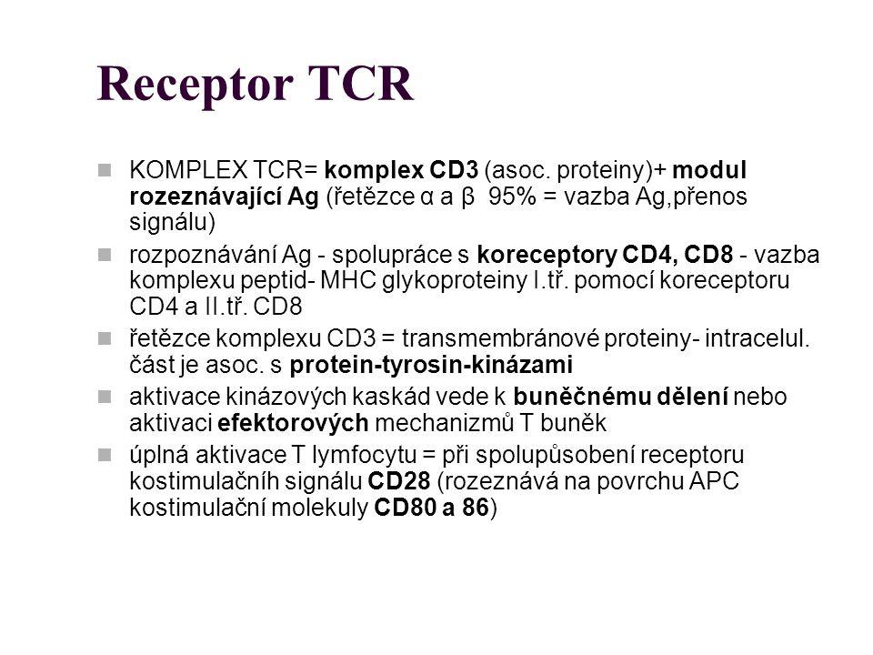 Receptor TCR KOMPLEX TCR= komplex CD3 (asoc. proteiny)+ modul rozeznávající Ag (řetězce α a β 95% = vazba Ag,přenos signálu) rozpoznávání Ag - spolupr