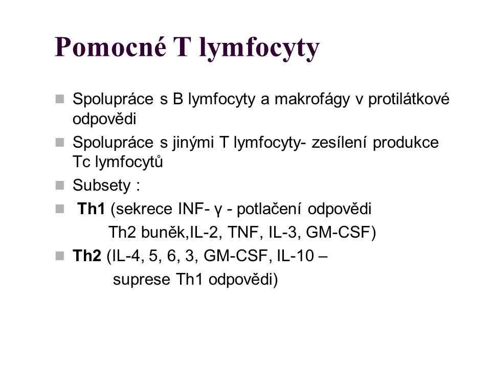 Pomocné T lymfocyty Spolupráce s B lymfocyty a makrofágy v protilátkové odpovědi Spolupráce s jinými T lymfocyty- zesílení produkce Tc lymfocytů Subse