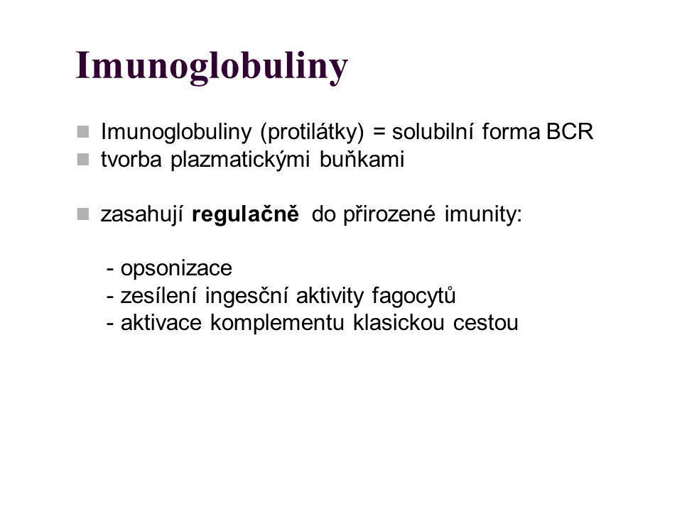 Imunoglobuliny Imunoglobuliny (protilátky) = solubilní forma BCR tvorba plazmatickými buňkami zasahují regulačně do přirozené imunity: - opsonizace -