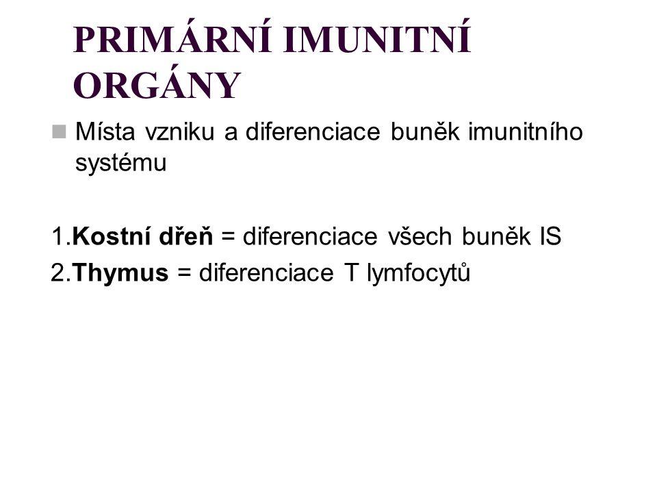 PRIMÁRNÍ IMUNITNÍ ORGÁNY Místa vzniku a diferenciace buněk imunitního systému 1.Kostní dřeň = diferenciace všech buněk IS 2.Thymus = diferenciace T ly