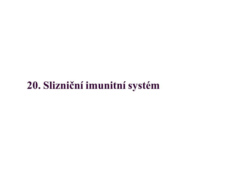20. Slizniční imunitní systém