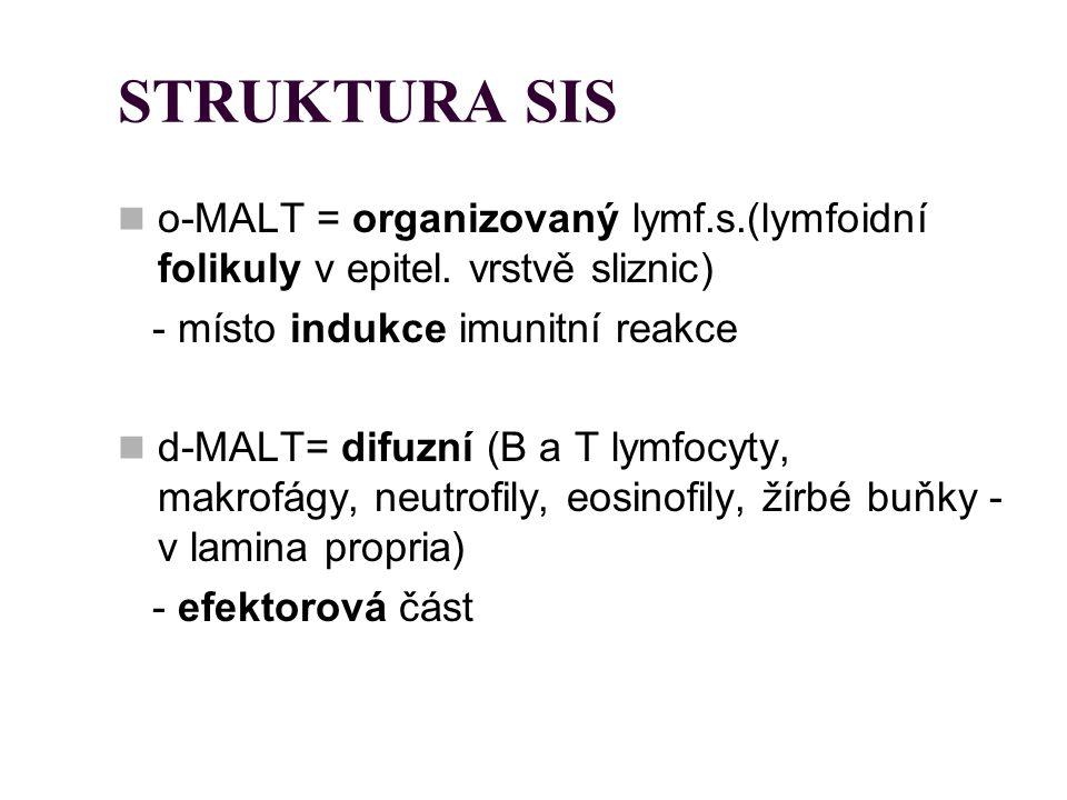 STRUKTURA SIS o-MALT = organizovaný lymf.s.(lymfoidní folikuly v epitel. vrstvě sliznic) - místo indukce imunitní reakce d-MALT= difuzní (B a T lymfoc