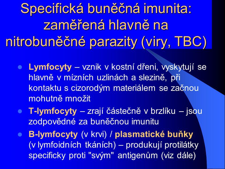 Specifická buněčná imunita: zaměřená hlavně na nitrobuněčné parazity (viry, TBC) Lymfocyty – vznik v kostní dřeni, vyskytují se hlavně v mízních uzlin