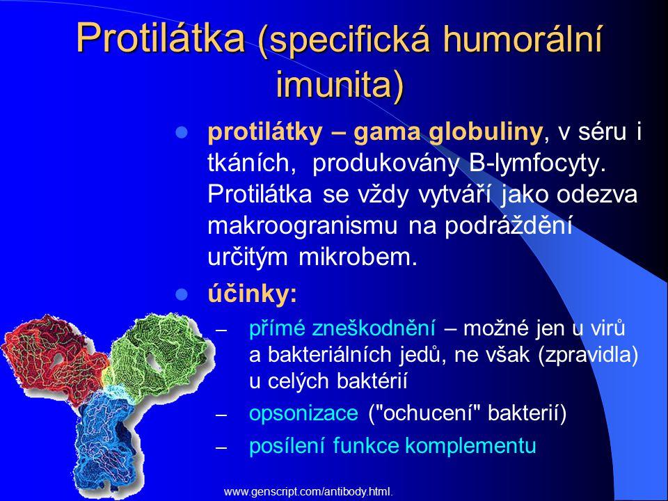 Protilátka (specifická humorální imunita) protilátky – gama globuliny, v séru i tkáních, produkovány B-lymfocyty. Protilátka se vždy vytváří jako odez