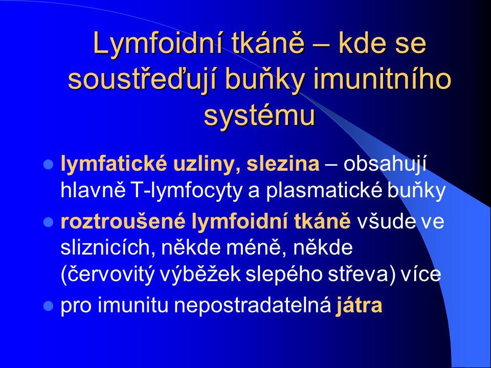 Lymfoidní tkáně – kde se soustřeďují buňky imunitního systému lymfatické uzliny, slezina – obsahují hlavně T-lymfocyty a plasmatické buňky roztroušené