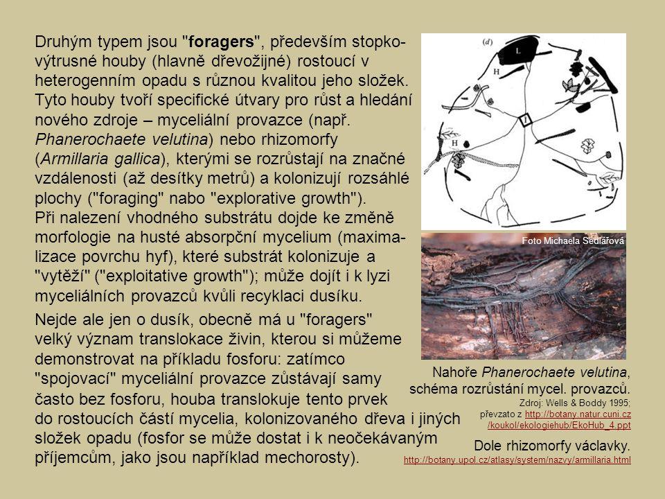 Druhým typem jsou foragers , především stopko- výtrusné houby (hlavně dřevožijné) rostoucí v heterogenním opadu s různou kvalitou jeho složek.