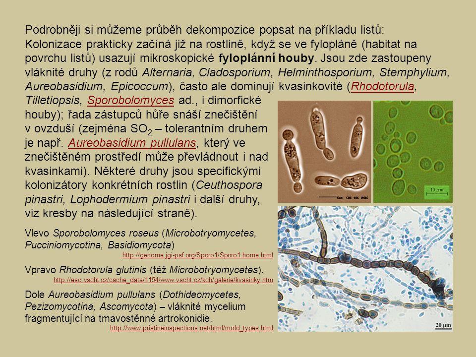 Podrobněji si můžeme průběh dekompozice popsat na příkladu listů: Kolonizace prakticky začíná již na rostlině, když se ve fylopláně (habitat na povrchu listů) usazují mikroskopické fyloplánní houby.
