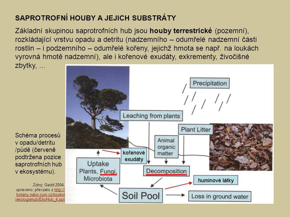 Schéma procesů v opadu/detritu /půdě (červeně podtržena pozice saprotrofních hub v ekosystému).